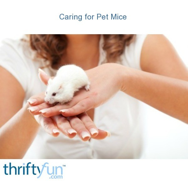 caring for pet mice thriftyfun