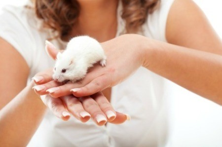 White Mouse on Woman's Hands