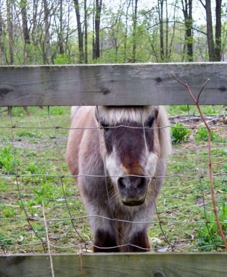 Photo of a pony.