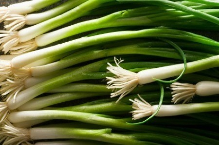 storing green onions