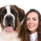 Saint Bernard Breed Information and Photos