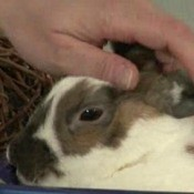 Woman Petting Rabbit
