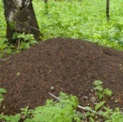 Ant Hill in Forest