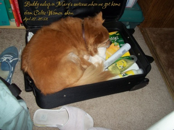 Buddy in a suitcase