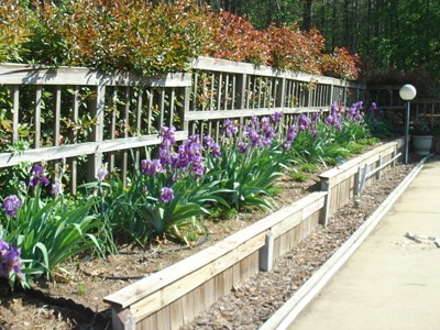 Bed of Irises