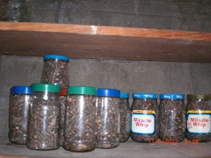 Packing Away Fuel For Emergencies - sticks in jars