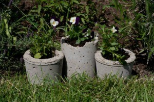 Pansies in Hypertufa Pots