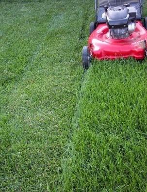 Choosing The Best Lawnmower Height Setting Thriftyfun