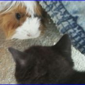 Ashlei (Guinea Pig) and Whiskers (Cat)