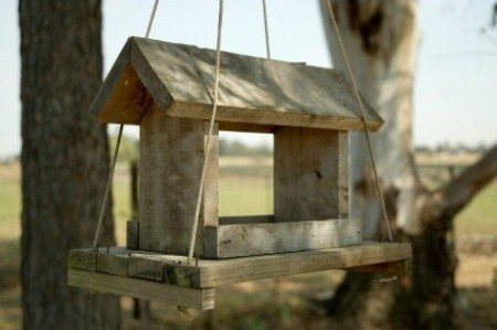 Homemade Bird Feeders