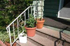 Container Garden on Stairs