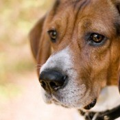 Remedies for Pet Anxiety
