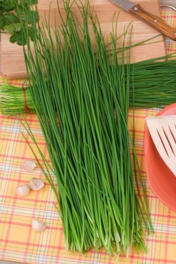 how to keep cut chives fresh