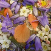 Closeup of floating flowers and petals.