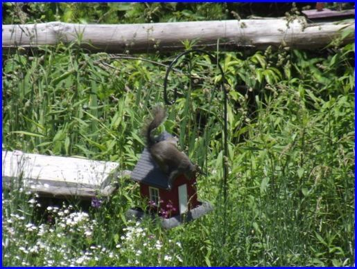 Squirrel on bird feeder.