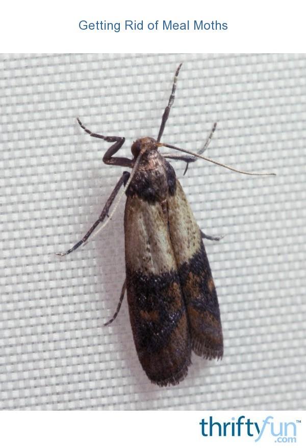 Getting Rid Of Moths In Food Pantry