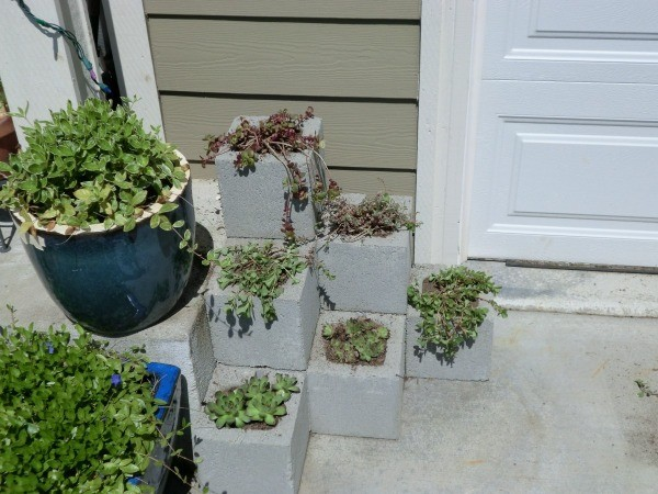 cinder block planters thriftyfun. Black Bedroom Furniture Sets. Home Design Ideas