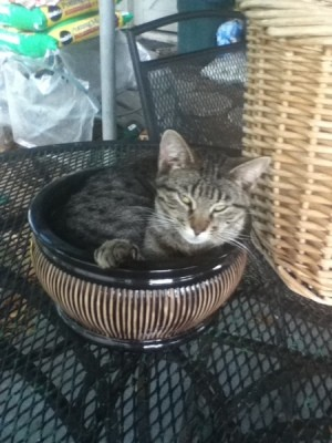 Cat in a flower pot.