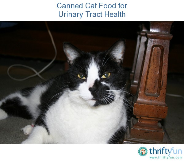 Canned Cat Food for Urinary Tract Health | ThriftyFun
