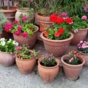 Container Plants on Patio