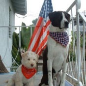 two patriotic dogs