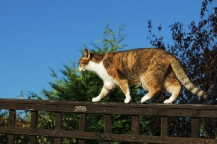 How do I keep cats out of my yard?