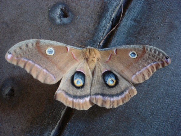 Full view of the moth.