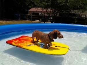 Hippie on a float board in the pool.