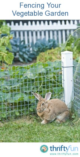 Fencing your vegetable garden thriftyfun - How to protect vegetable garden from animals ...