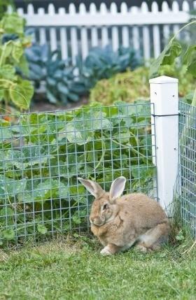 Fencing Your Vegetable Garden | ThriftyFun