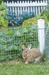 Protecting Your Garden From Pests Thriftyfun