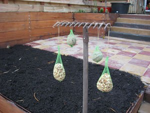 bird seed bags hanging from an old rake stuck in ground
