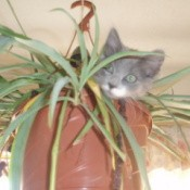 Kitten in hanging potted plant.