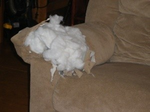 Dog Ate Couch Arm Thriftyfun