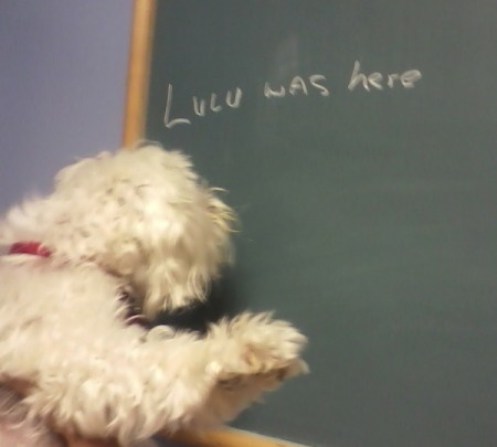 "Someone holding Lulu up to a chalk board that says, ""Lulu was here""."