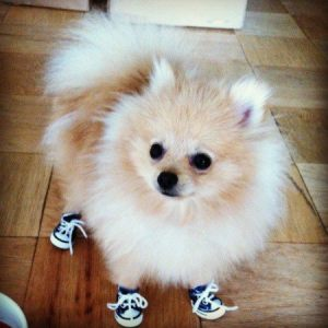 Pom in sneakers.