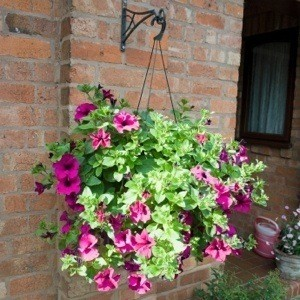 Watering Hanging Baskets