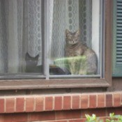 Kitties in the window.