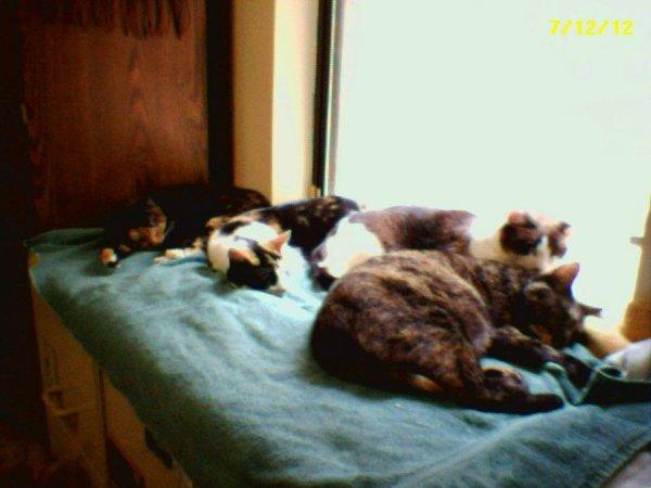 Plywood Window Seat For Kitties Enjoying The Sun