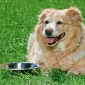 Preventing Algae in Pet Water Bowls
