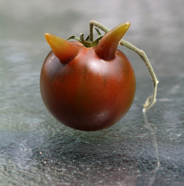 Heirloom tomato with two horn like protrusions.