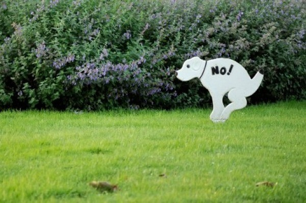 A no dog pooping sign in someone's lawn.