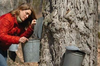 Cleaning Tree Sap Off Hands
