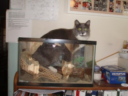 Fuzzy the cat in a reptile tank.