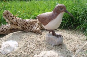 A wood carving of a Wester Sandpiper