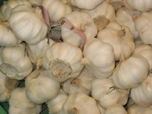Using Garlic to Prevent Fleas