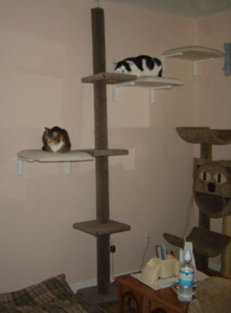Cat tree with chair seats attached to wall.