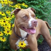 Pit standing in front of flowers.