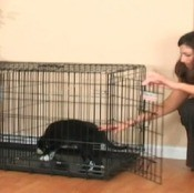Video about crate training.