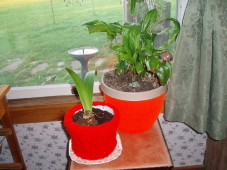 Red crochet hats decorating potted plants.